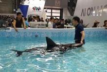 CES Asia直击:像飞机的水下机器人
