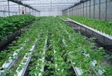 抗高湿二氧化碳传感器在农业大棚的应用