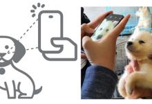 又見黑科技,關于寵物識別你知道多少?