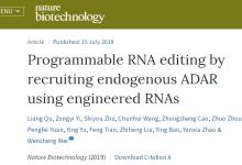 北大科研人员提出新型基因编辑技术