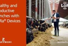 Semtech和itk利用LoRa器件打造健康与高效的牧场