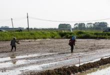 極飛科技開展農業無人機水稻直播與人工直播對比演示