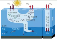 瞄准碳中和愿景,海洋碳汇催生产业新机遇!