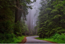 森林勘测新法器:背包式LiDAR